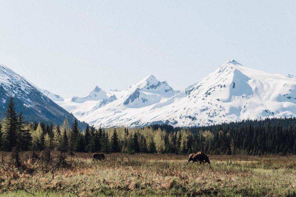 Paisaje montañoso con montañas nevadas y bosque de abetos y alces. Poppyns Magazine