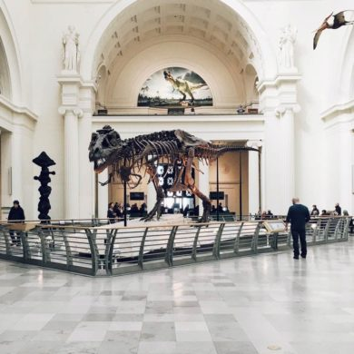 Esqueleto de Tiranosaurio Rex en el interior de un museo. Poppyns Magazine