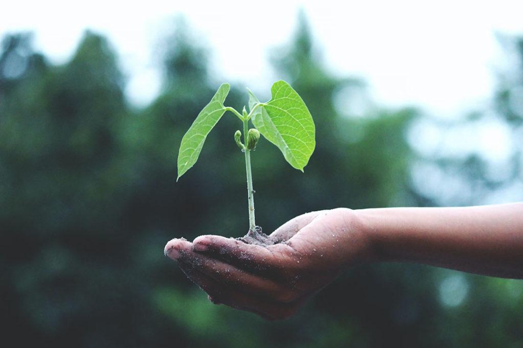 Planta creciendo dentro de una mano humana. Poppyns Magazine