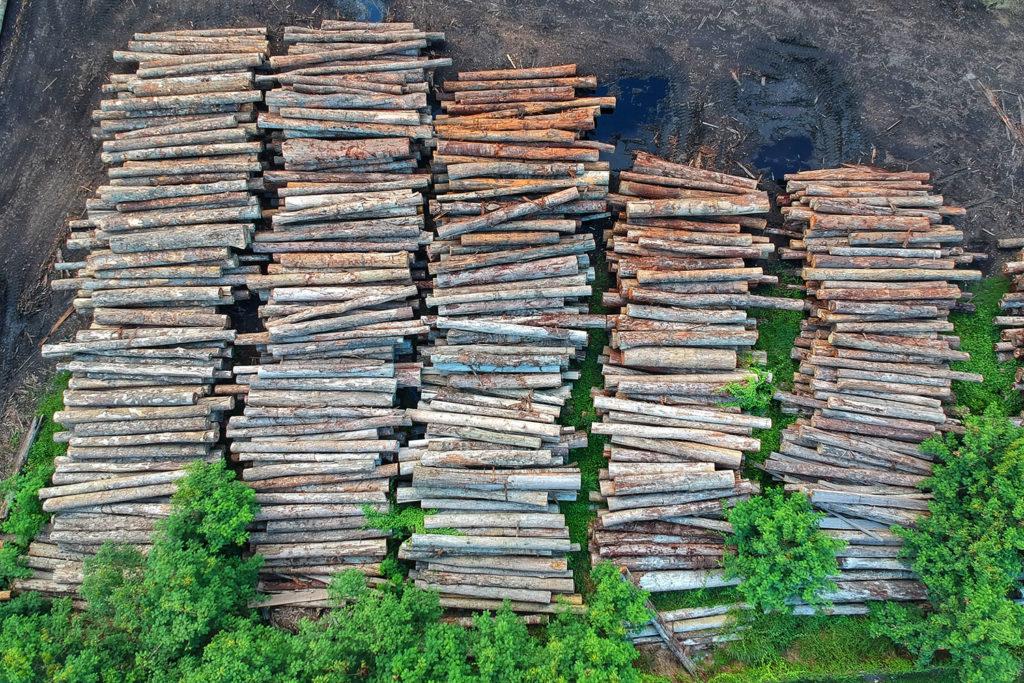 Troncos de árboles cortados apilados. Poppyns Magazine