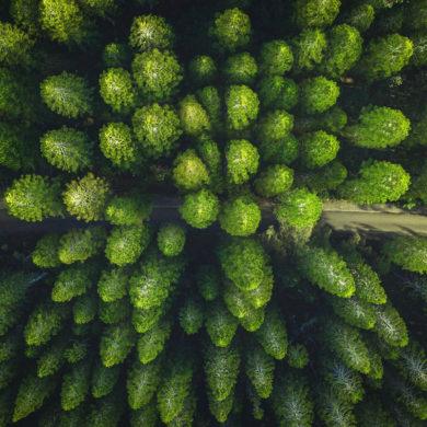 Bosque de árboles verdes vistos desde arriba. Poppyns Magazine